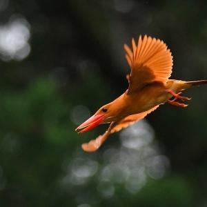 鳥撮ってみました!