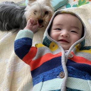 hanacholog 愛犬と赤ちゃんとの暮らし