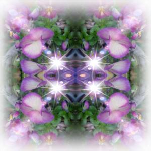 若紫のカトリーヌ「勝手にカトリーヌコーナー」