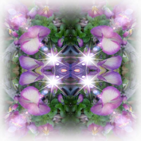 若紫のカトリーヌさんのプロフィール