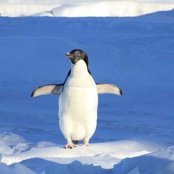ペンギン太郎さんのプロフィール