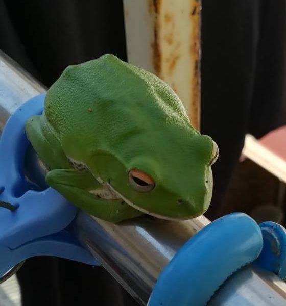青い蛙さんのプロフィール