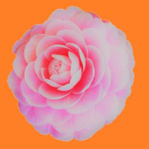 花集め*花探し