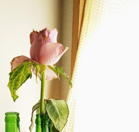 春海 晶穂さんのプロフィール