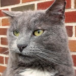 シャム猫になりそうなブログ