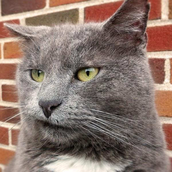 シャム猫さんのプロフィール