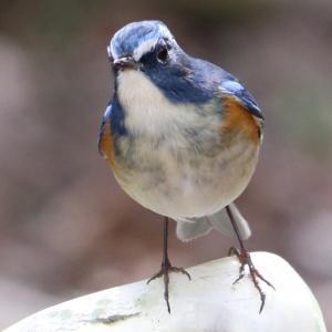 定年おやじ野鳥写真へ再挑戦のブログ