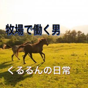 馬の牧場で働く男