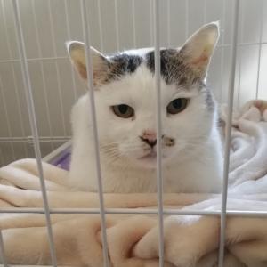 保護猫きなこちゃんと家族の奮闘記