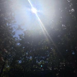 むーぽのヒーリングライフ 〜The Healing Rays〜