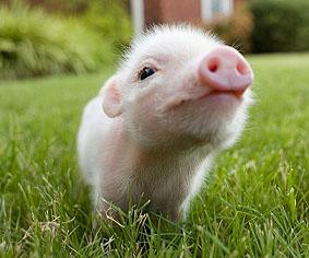 Investors Cityという名の豚ブログFX