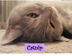 CATNIPさんのプロフィール