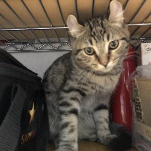 フラフィ 猫と暮らすブログ