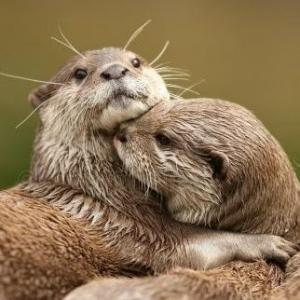 otterlife