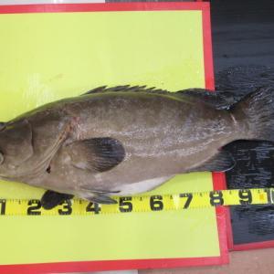 日本の釣りにしらしんけん ~ ジギング タイラバ 船釣り タックルインプレ等~