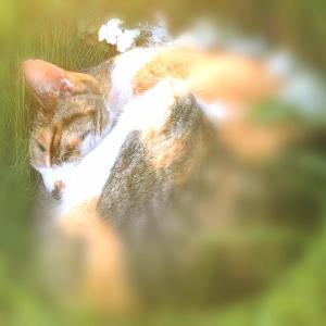 夢みる猫の日記