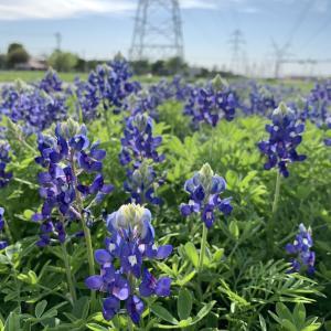 アメリカ生活365 in Dallas 日常の記録