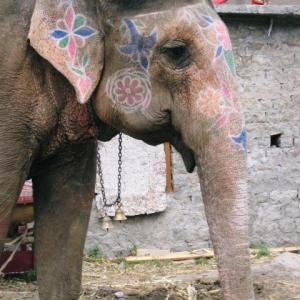 Love&Free in インド