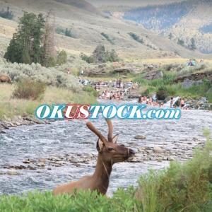 OKUSTOCK.COM|OKUの米国株投資-企業分析ブログ