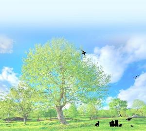 アニマルコミュニケーターアコ & パートナーケコ《動物の本音》