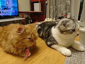 AGU&KINA (我が家の猫さん達)