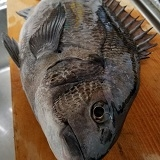 房総半島でクロダイを釣りたい人のためのブログ