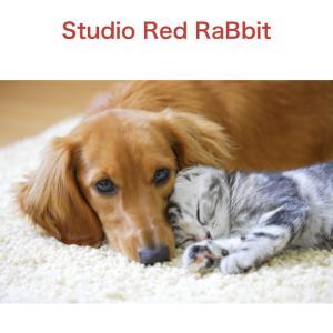 Studio Red RaBbit