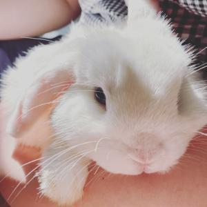 Rabbit-V- うさぎと暮らす