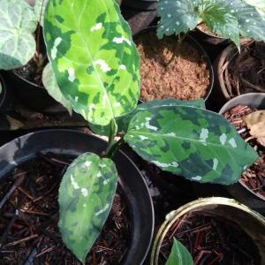 タイで観葉植物を楽しむ