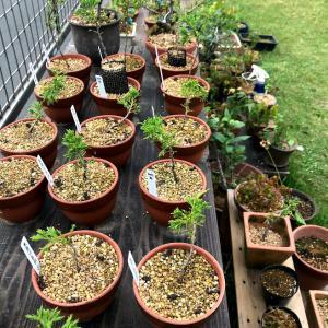盆栽の時間