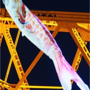 江戸川ダイコンの赤鯉日記2020