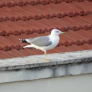 燕雀の鉄道・中国・商社ブログ