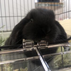 Takuto's Pet