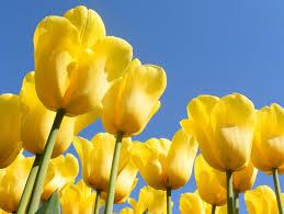 Tulipaさんのプロフィール