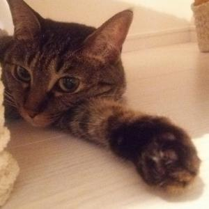 tanablog 猫と車を中心に中年のライフスタイルを発信するブログ