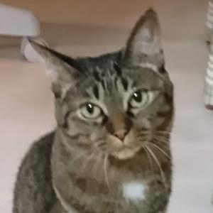 tanablog 猫と毎日夜ふかし営業マンのブログ