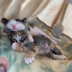 ひめと大福と気ままな猫暮らし