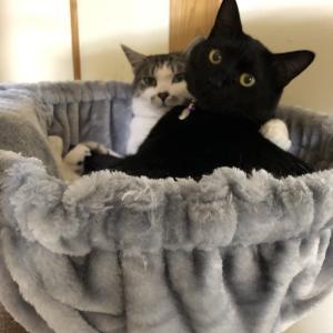 愛猫と戯れる日々♥