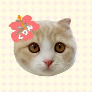 猫のくりん@くりんのおうち
