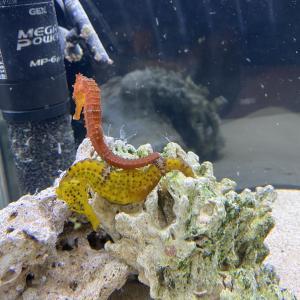 ビアバー海水魚飼育日記