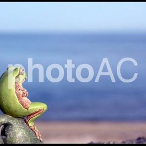 枯れた井戸の蛙が語る