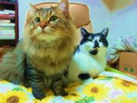 猫たちと一人暮らし