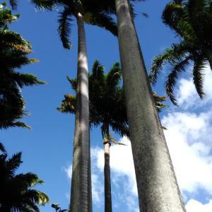 papaiyamango