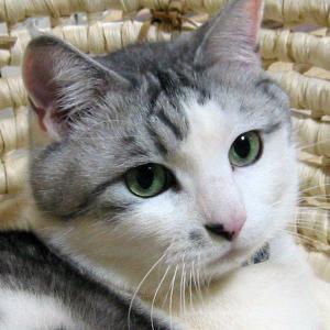 猫好きが読んだ千冊の本