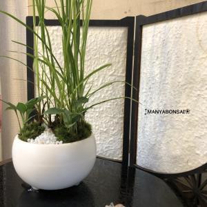 ワーママの癒しの盆栽部屋〜ときどき園芸〜