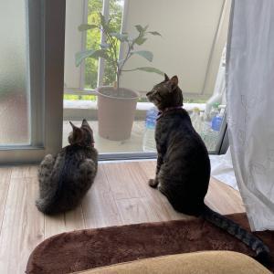 友・結羽の猫日記
