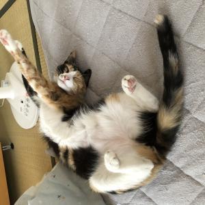 みかんの大冒険・猫夫婦 / Mikan's great adventure