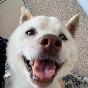 うちの犬~わんこの中の人