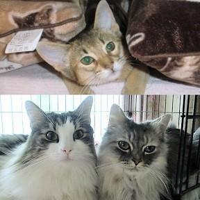 猫7匹と同居中♪ 猫は可愛いニャン