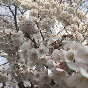 中学受験生の母ブログ